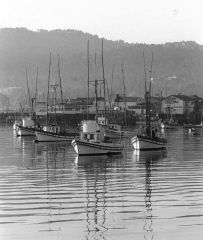 """Fishing boats at anchor off Fisherman's Wharf, by Jerry Lebeck, The Jerry Lebeck Collection, California History Room, © Monterey Public Library"""""""